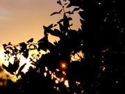 21st Sep 2015 - Sunset through the hedgerow