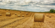3rd Sep 2015 - Harvest Time in the UK