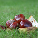 Conkers by jamibann