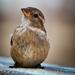 A small bird of some sort..... by swillinbillyflynn