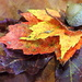 Welcome to Autumn! by homeschoolmom