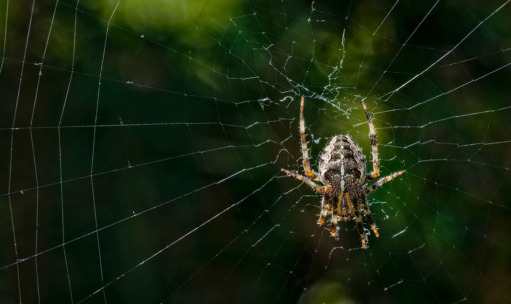 Spider Doing Head Stand by jgpittenger