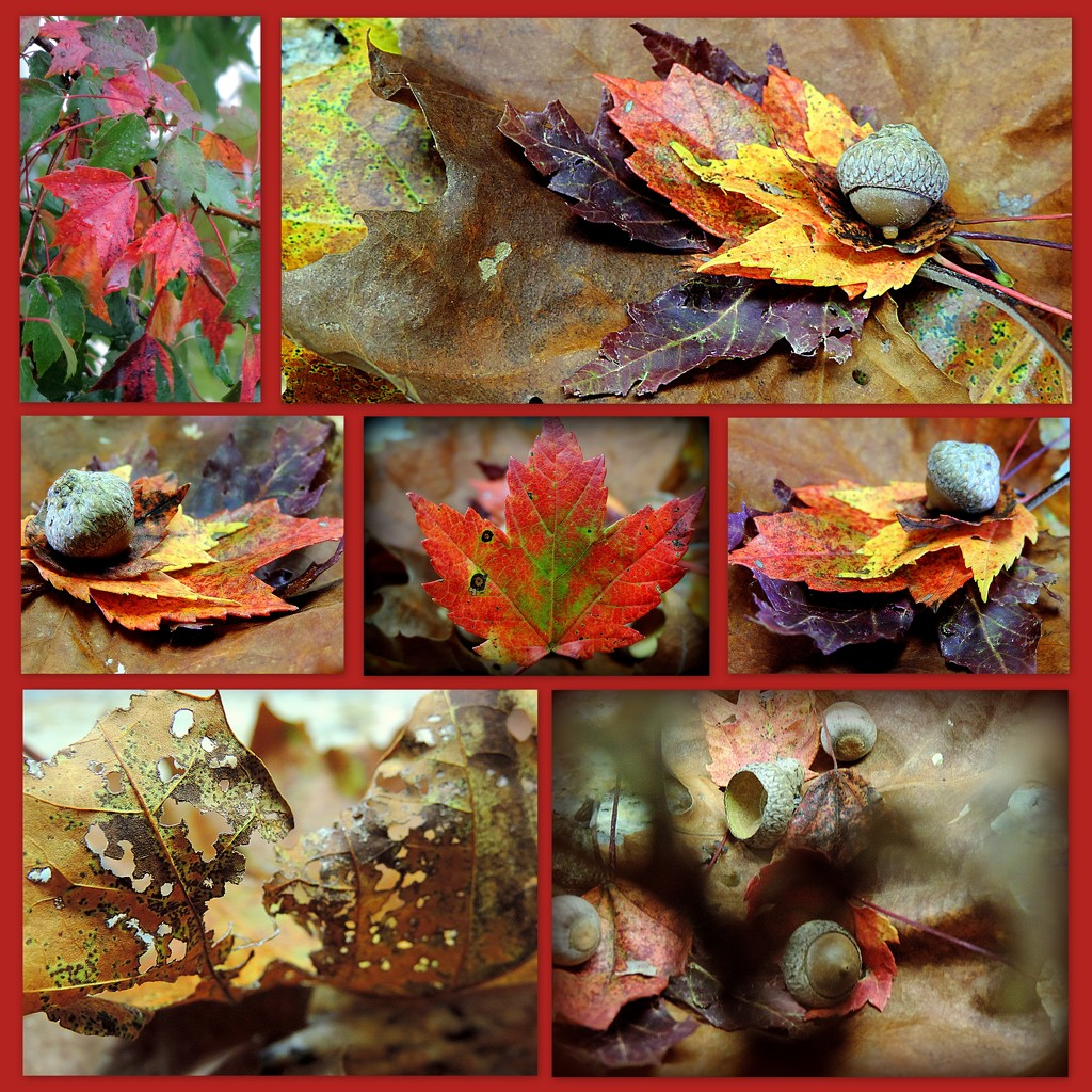 Leaf me alone, I'm having fun! by homeschoolmom