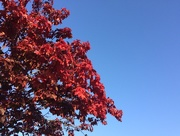 26th Sep 2015 - Day 3 - Autumn Colours and Blue Sky - 100happydays2015
