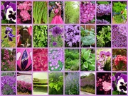 31st May 2015 - Spring colours