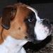 Pippa portrait by kiwinanna