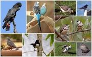 29th Sep 2015 - A Few More Bird Shots...