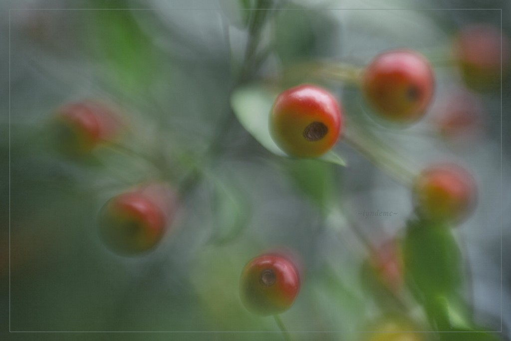 Autumn Blush by lyndemc
