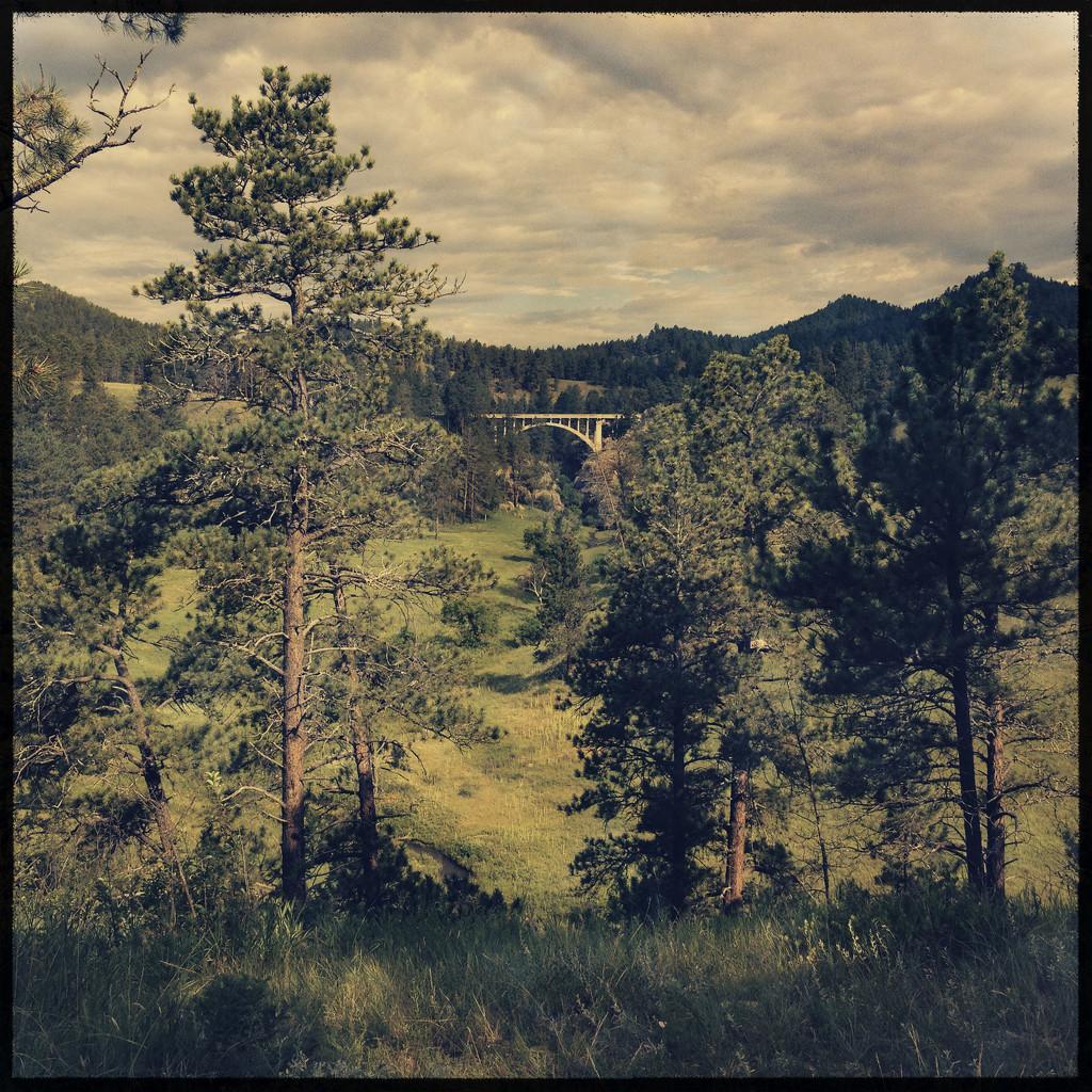 Custer State Park, SD by jeffjones