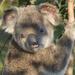 love Clinger by koalagardens