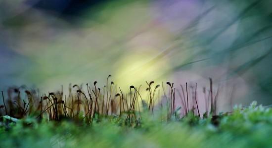 Mossland by motherjane