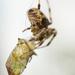 Bye bye grasshopper