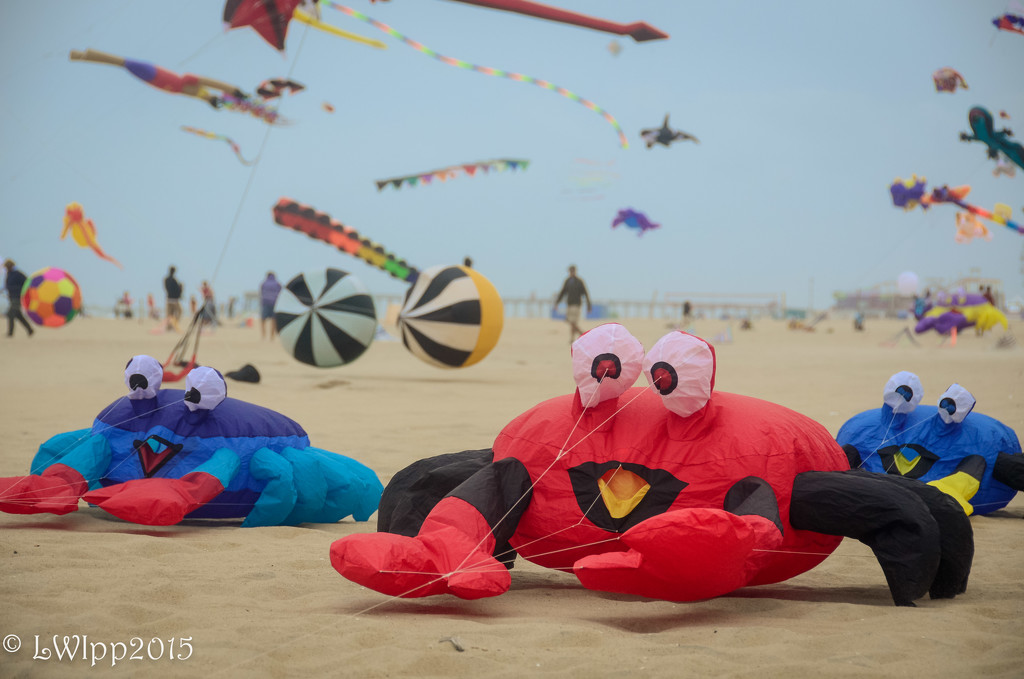 It Was A Crabby Day At The Beach by lesip