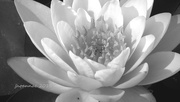 1st Oct 2015 - flower b