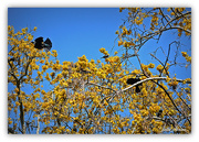 2nd Oct 2015 - How Many Tui's..