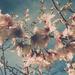 Spring dream by brigette