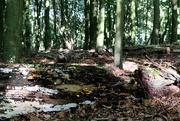 2nd Oct 2015 - In a Beech wood.