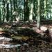 In a Beech wood.
