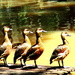 Military Ducks!!! by 777margo