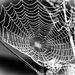 dewy cobwebs.. by susie1205