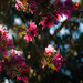 Berrima Blossoms by annied