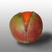 Zipped Fruit by salza