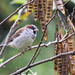 Bird season