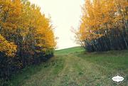 3rd Oct 2015 - Autumn