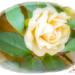 Rose (best viewed on black)