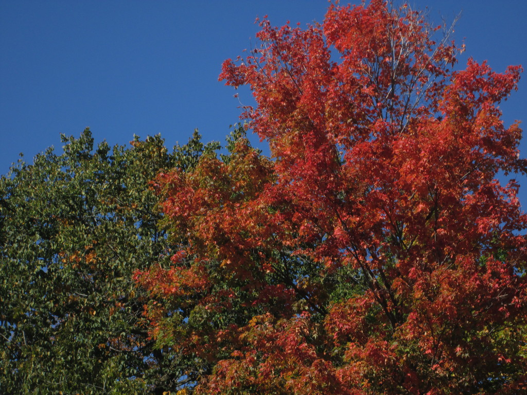 No denying it fall is here - fall colors by bruni