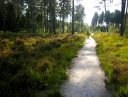 4th Oct 2015 - A sand path trough the woods