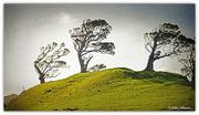 5th Oct 2015 - Windswept Tree's
