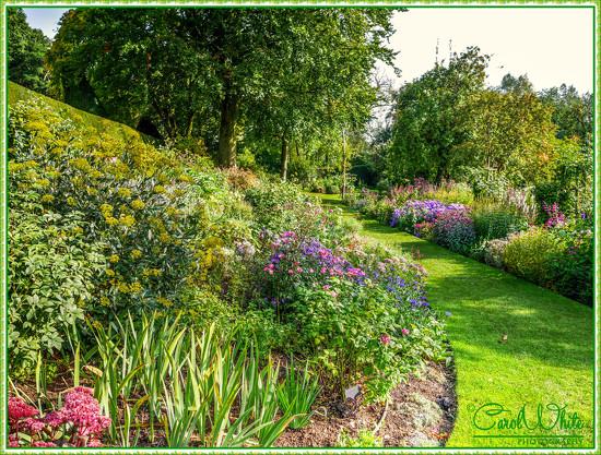Floral Borders by carolmw
