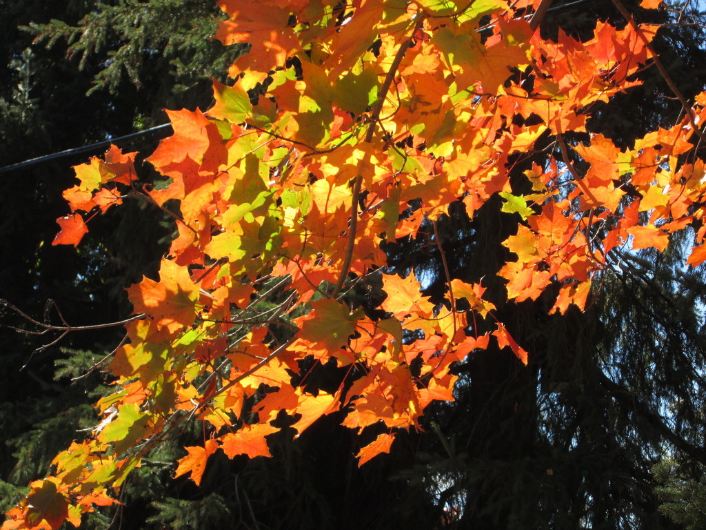 Fall colors by bruni