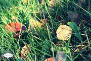 5th Oct 2015 - Fallen Leaves