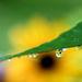Flower Shower! by fayefaye