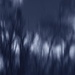 trees against sky in blue by blueberry1222