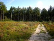 6th Oct 2015 - Path to a pine wood