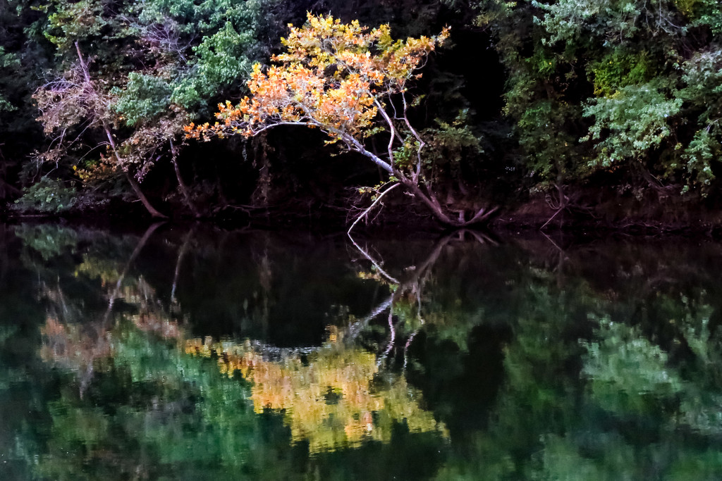Reflections by milaniet