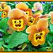 Orange Faces. by wendyfrost