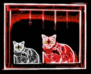 8th Oct 2015 - Neon Zombie Kitties! Not my picture, just me twisted edit!