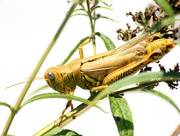 24th Sep 2015 - Differential grasshopper