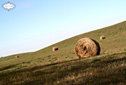 7th Oct 2015 - Hay Bale