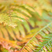 german fern #114 by ricaa