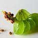 Impatiens seeds by novab