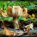 McDade Mushroom by olivetreeann