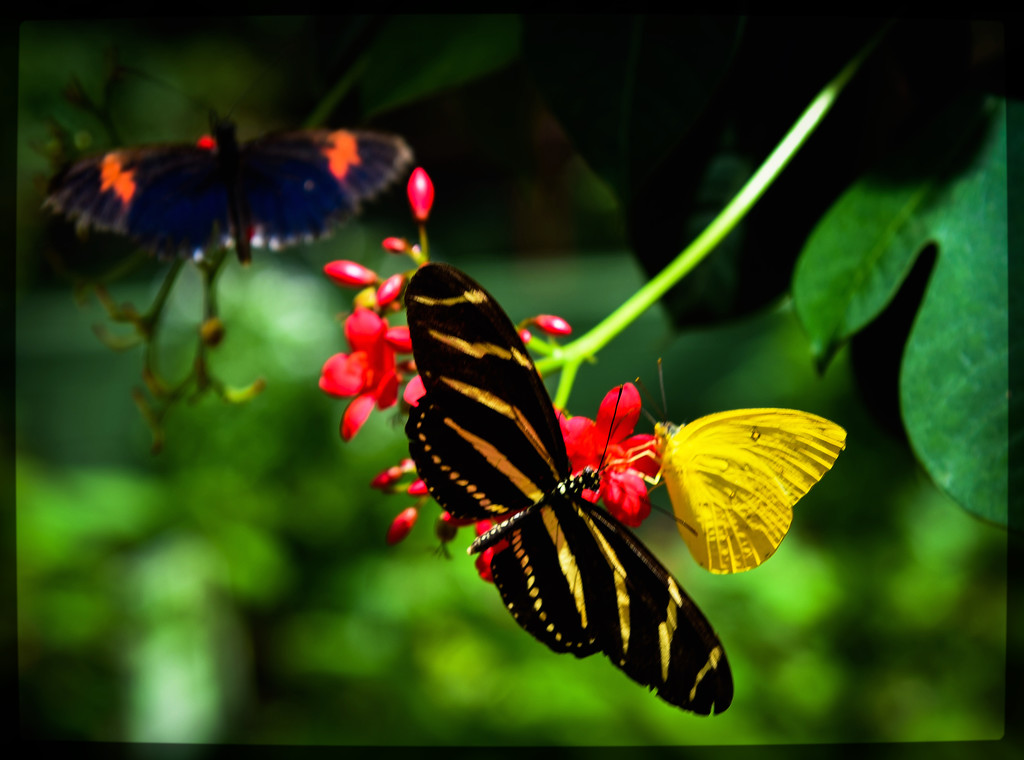 Butterfly Convention by stray_shooter