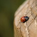 Happy Days 15. Lady Bug by newbank