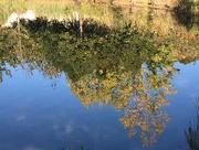 19th Nov 2019 - Reflections