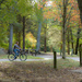 Pedalling through the park by mccarth1